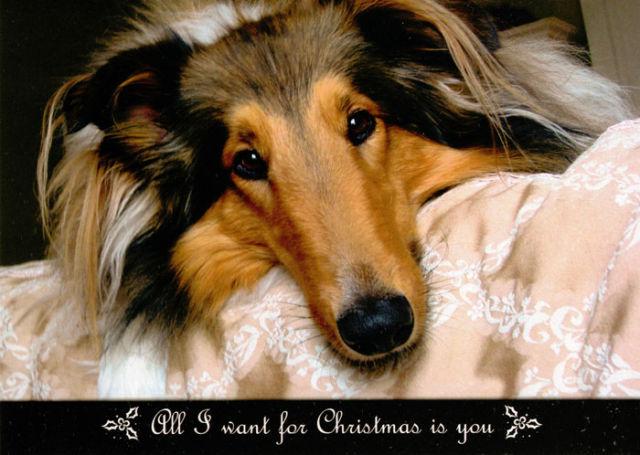Collie Rescue of the Carolinas Christmas Card 2012