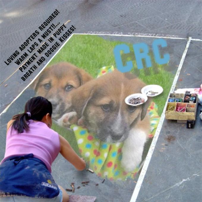 Puppies 052013