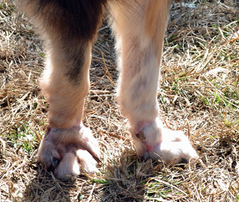 Duke feet