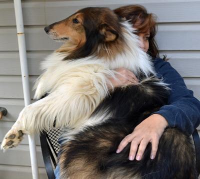 Jack lap dog