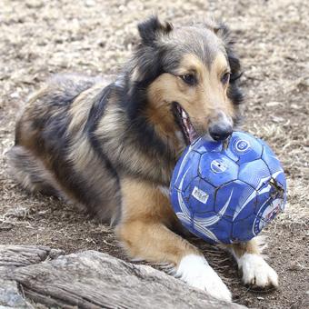 Sam soccer ball