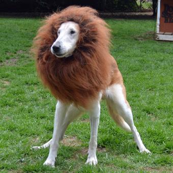 Twinkle Lion 2