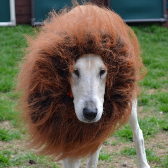 Twinkle Lion